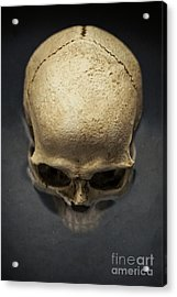 Skull  Acrylic Print by Edward Fielding