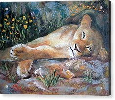 Acrylic Print featuring the painting Sleep Lion by Jieming Wang