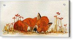 Sleeping Red Fox Acrylic Print by Juan  Bosco