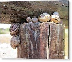 Snails Acrylic Print