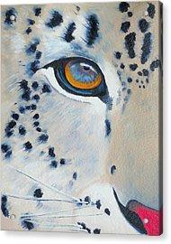Snow Leopard Eye Acrylic Print by John  Sweeney