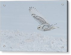 Acrylic Print featuring the photograph Snowy Owl #2/3 by Patti Deters