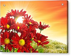 Spring Blossom Acrylic Print by Carlos Caetano