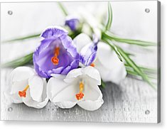 Spring Crocus Flowers Acrylic Print