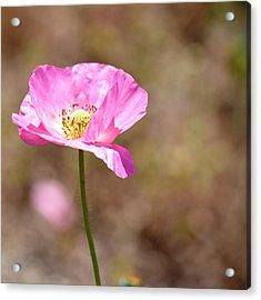 Spring Poppy Flower Acrylic Print