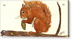 Squirrel Acrylic Print by Juan  Bosco