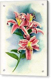 Stargazer Lilies Acrylic Print