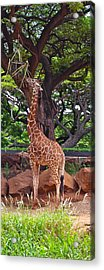 Stretching It Acrylic Print by Michele Myers