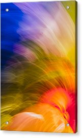 Summer Bloom Acrylic Print by Jon Glaser