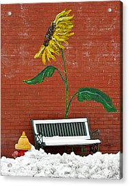 Sunflower And Snow Acrylic Print by Chris Berry