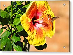 Sunny And Bright Acrylic Print by Lynn Bauer