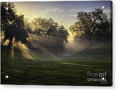 Sunrise Among The Oaks Acrylic Print