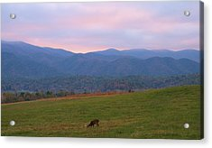 Sunrise In Cades Cove Acrylic Print by Dan Sproul
