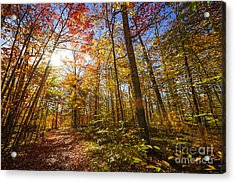 Sunshine In Fall Forest Acrylic Print