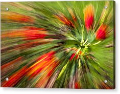 Swirl Of Red Acrylic Print by Jon Glaser