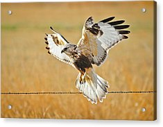 Taking Flight Acrylic Print by Greg Norrell