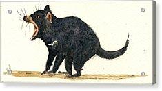Tasmanian Devil Acrylic Print