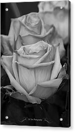Tea Roses In Black And White Acrylic Print