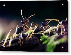 Termites Acrylic Print by Melvyn Yeo