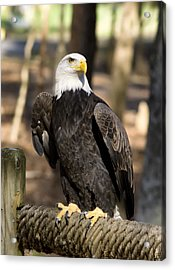 The Eagle Has Landed Acrylic Print by B Wayne Mullins