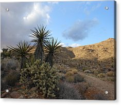 The Living Desert Acrylic Print