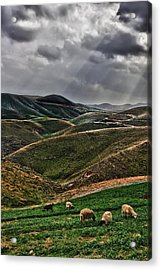 The Lord Is My Shepherd Judean Hills Israel Acrylic Print