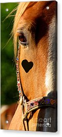 Acrylic Print featuring the photograph The Love Of A Horse by France Laliberte