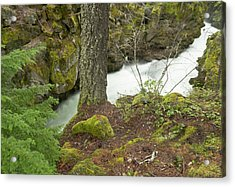 The Upper Rogue River Flows Acrylic Print by William Sutton