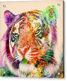 Tiger Portrait  Acrylic Print by Mark Ashkenazi