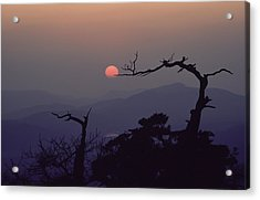 Tree And Sun From Mt Scott Acrylic Print