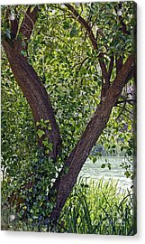 Acrylic Print featuring the photograph Tree At Stow Lake by Kate Brown