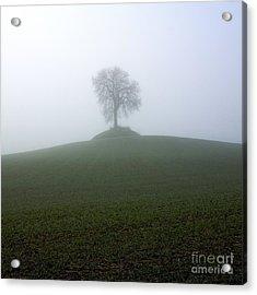 Tree Acrylic Print by Bernard Jaubert