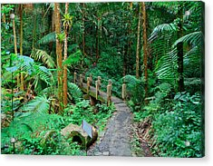 Tropical Rain Forest In San Juan Acrylic Print