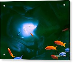 Tropical Sea Cave Acrylic Print by Steed Edwards