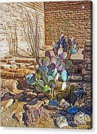 Tucson Arizona Cactus Acrylic Print by Gregory Dyer