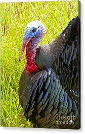 Turkey Acrylic Print by Graham Foulkes