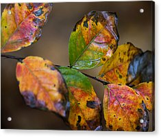Acrylic Print featuring the photograph Turning Leaves by Stephen Anderson