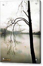 Acrylic Print featuring the photograph Twiggy by Sadie Reneau