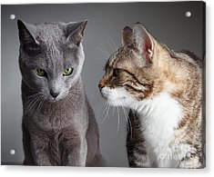 Two Cats Acrylic Print by Nailia Schwarz