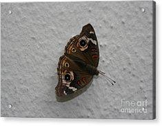 Mothra Acrylic Print