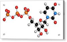 Uridine Triphosphate Nucleotide Molecule Acrylic Print by Molekuul