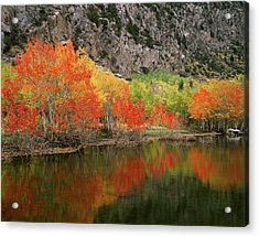 Usa, California, Sierra Nevada Acrylic Print by Christopher Talbot Frank