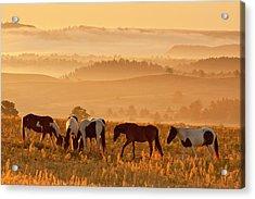Usa, South Dakota Acrylic Print by Jaynes Gallery