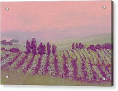 Vineyard At Dusk Acrylic Print