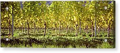 Vineyard, Sitges, Barcelona, Catalonia Acrylic Print by Panoramic Images