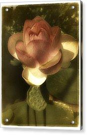 Vintage Lotus Acrylic Print