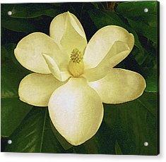 Vintage Magnolia Acrylic Print