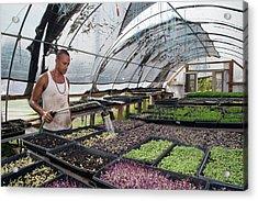 Volunteer At An Urban Farm Acrylic Print by Jim West