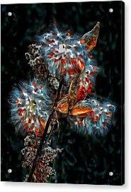 Weed Galaxy  Acrylic Print by Steve Harrington