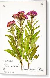 Western Ironweed Acrylic Print